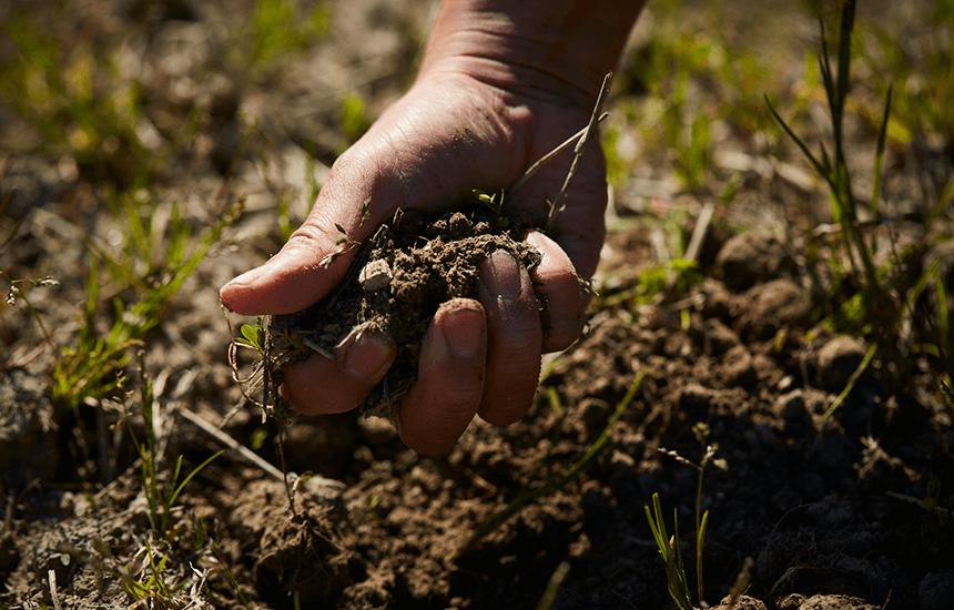 一つかみの表土には数十億の顕微鏡サイズの虫が生息できる